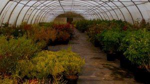 Serres plantes jardins